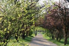 Περπάτημα του την άνοιξη χρωματισμένου πάρκου στοκ φωτογραφία