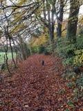 Περπάτημα φθινοπώρου στοκ φωτογραφία με δικαίωμα ελεύθερης χρήσης