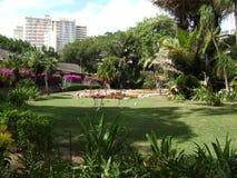 Περπάτημα φλαμίγκο στο ζωολογικό κήπο της Χαβάης στοκ φωτογραφίες