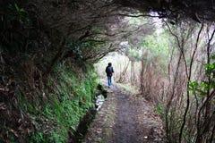 περπάτημα φύσης Στοκ Εικόνες