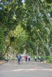 Περπάτημα Χάιντ Παρκ Στοκ εικόνες με δικαίωμα ελεύθερης χρήσης