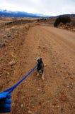 περπάτημα όψης σκυλιών Στοκ φωτογραφία με δικαίωμα ελεύθερης χρήσης