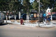Περπατήστε τα σκυλιά μέσω των οδών Bodrum Στοκ φωτογραφίες με δικαίωμα ελεύθερης χρήσης