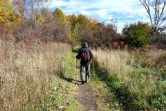περπατώντας δάσος στοκ φωτογραφίες