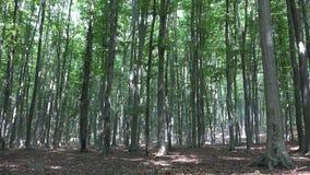Περπατώντας δάσος, στρατοπέδευση, ακολουθώντας φύλλα φυλλώματος, ξύλο κλάδων ακτίνων ακτίνων ήλιων στοκ εικόνα