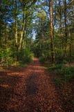 Περπατώντας μέσω του δάσους της Σλοβενίας στοκ φωτογραφίες