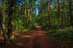 Περπατώντας μέσω του δάσους της Σλοβενίας 2 στοκ εικόνες με δικαίωμα ελεύθερης χρήσης