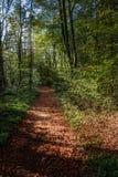 Περπατώντας μέσω του δάσους της Σλοβενίας 3 στοκ εικόνα