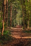 Περπατώντας μέσω του δάσους της Σλοβενίας 4 στοκ φωτογραφίες