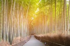 Περπατώντας την πορεία στο μπαμπού δασικό Arashiyama Κιότο Ιαπωνία Στοκ Φωτογραφία