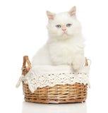Περσική γάτα στο ψάθινο καλάθι Στοκ φωτογραφία με δικαίωμα ελεύθερης χρήσης