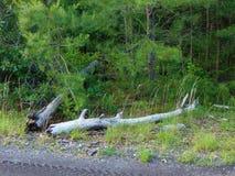 Πεσμένα άκρα στα ξύλα στοκ φωτογραφίες με δικαίωμα ελεύθερης χρήσης