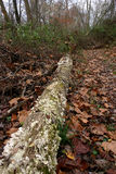 Πεσμένα δέντρα στο δάσος Στοκ εικόνες με δικαίωμα ελεύθερης χρήσης