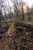 Πεσμένα δέντρα στο δάσος Στοκ Φωτογραφίες