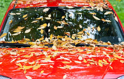 πεσμένα αυτοκίνητο φύλλα Στοκ Εικόνες