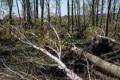 Πεσμένα δέντρα μετά από την ανεμοθύελλα Στοκ εικόνες με δικαίωμα ελεύθερης χρήσης