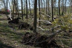 Πεσμένα δέντρα μετά από την ανεμοθύελλα Στοκ φωτογραφία με δικαίωμα ελεύθερης χρήσης