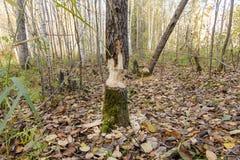 πεσμένα δέντρα Στοκ Φωτογραφία
