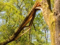 πεσμένα ζημία δασικά δέντρα θύελλας στοκ εικόνες με δικαίωμα ελεύθερης χρήσης