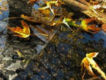 Πεσμένα κίτρινα φύλλα στο γυαλί και την κουκούλα του αυτοκινήτου Στοκ εικόνες με δικαίωμα ελεύθερης χρήσης
