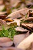 πεσμένα ο Καναδάς φύλλα Ο& Στοκ εικόνα με δικαίωμα ελεύθερης χρήσης