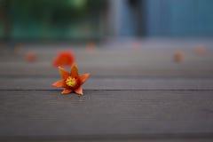 Πεσμένα πέταλα στο ξύλινο memery Œlost floorï ¼ Στοκ Εικόνες