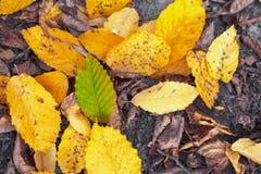 Πεσμένα πράσινα και κίτρινα φύλλα στοκ εικόνες με δικαίωμα ελεύθερης χρήσης