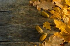Πεσμένα δρύινων και να υψωθεί βουνών τέφρας φύλλα σφενδάμνου φθινοπώρου, στο παλαιό ξύλινο πάτωμα Στοκ φωτογραφία με δικαίωμα ελεύθερης χρήσης