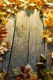 Πεσμένα δρύινων και να υψωθεί βουνών τέφρας φύλλα σφενδάμνου φθινοπώρου, στο παλαιό ξύλινο πάτωμα Στοκ Εικόνες