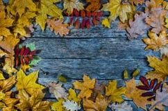 Πεσμένα δρύινων και να υψωθεί βουνών τέφρας φύλλα σφενδάμνου φθινοπώρου, στο παλαιό ξύλινο πάτωμα Στοκ εικόνα με δικαίωμα ελεύθερης χρήσης