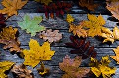 Πεσμένα δρύινων και να υψωθεί βουνών τέφρας φύλλα σφενδάμνου φθινοπώρου, στο παλαιό ξύλινο πάτωμα Στοκ Εικόνα
