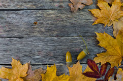 Πεσμένα δρύινων και να υψωθεί βουνών τέφρας φύλλα σφενδάμνου φθινοπώρου, στο παλαιό ξύλινο πάτωμα Στοκ Φωτογραφία
