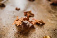 πεσμένα φθινόπωρο επίγεια Στοκ Εικόνες
