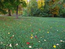 πεσμένα φθινόπωρο φύλλα Στοκ Φωτογραφία