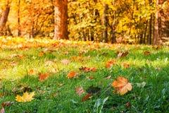 πεσμένα φθινόπωρο φύλλα Στοκ εικόνα με δικαίωμα ελεύθερης χρήσης