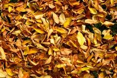 πεσμένα φθινόπωρο φύλλα Στοκ φωτογραφία με δικαίωμα ελεύθερης χρήσης