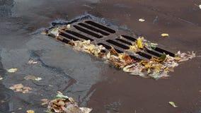 Πεσμένα φύλλα κοντά στο αστικό πλέγμα αγωγών στην οδό απόθεμα βίντεο