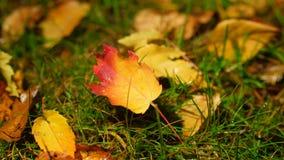 Πεσμένα φύλλα με τις πτώσεις βροχής, ελαφριά αλλαγή νύχτας στο σκοτάδι απόθεμα βίντεο