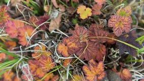 Πεσμένα φύλλα που βρίσκονται στην πράσινη χλόη βίντεο Εξωτερική ηλιόλουστη ημέρα φθινοπώρου Δασικός στενός επάνω επίγειας χλωρίδα φιλμ μικρού μήκους