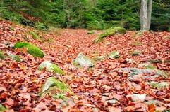 Πεσμένα φύλλα σε ένα δάσος Στοκ Φωτογραφία
