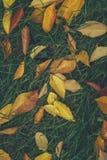 Πεσμένα φύλλα στην πράσινη χλόη Στοκ Εικόνες