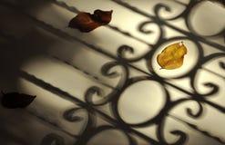Πεσμένα φύλλα φθινοπώρου με την εκλεκτής ποιότητας σκιά φραγών Στοκ Φωτογραφία