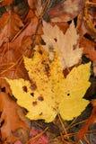 πεσμένα φύλλα Στοκ Φωτογραφία