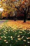 πεσμένα φύλλα Στοκ Φωτογραφίες