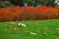 πεσμένα φύλλα Στοκ Εικόνα