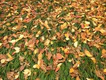 πεσμένα φύλλα Στοκ Εικόνες