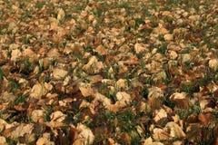 Πεσμένα φύλλα το φθινόπωρο Στοκ Φωτογραφίες