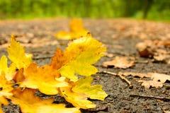 Πεσμένα φύλλα φθινοπώρου στον υγρό δρόμο Στοκ εικόνες με δικαίωμα ελεύθερης χρήσης