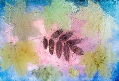 Πεσμένα φύλλα φθινοπώρου του σφενδάμνου, της βαλανιδιάς και του Rowan Στοκ Εικόνες