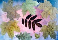 Πεσμένα φύλλα φθινοπώρου του σφενδάμνου, της βαλανιδιάς και του Rowan Στοκ Φωτογραφίες